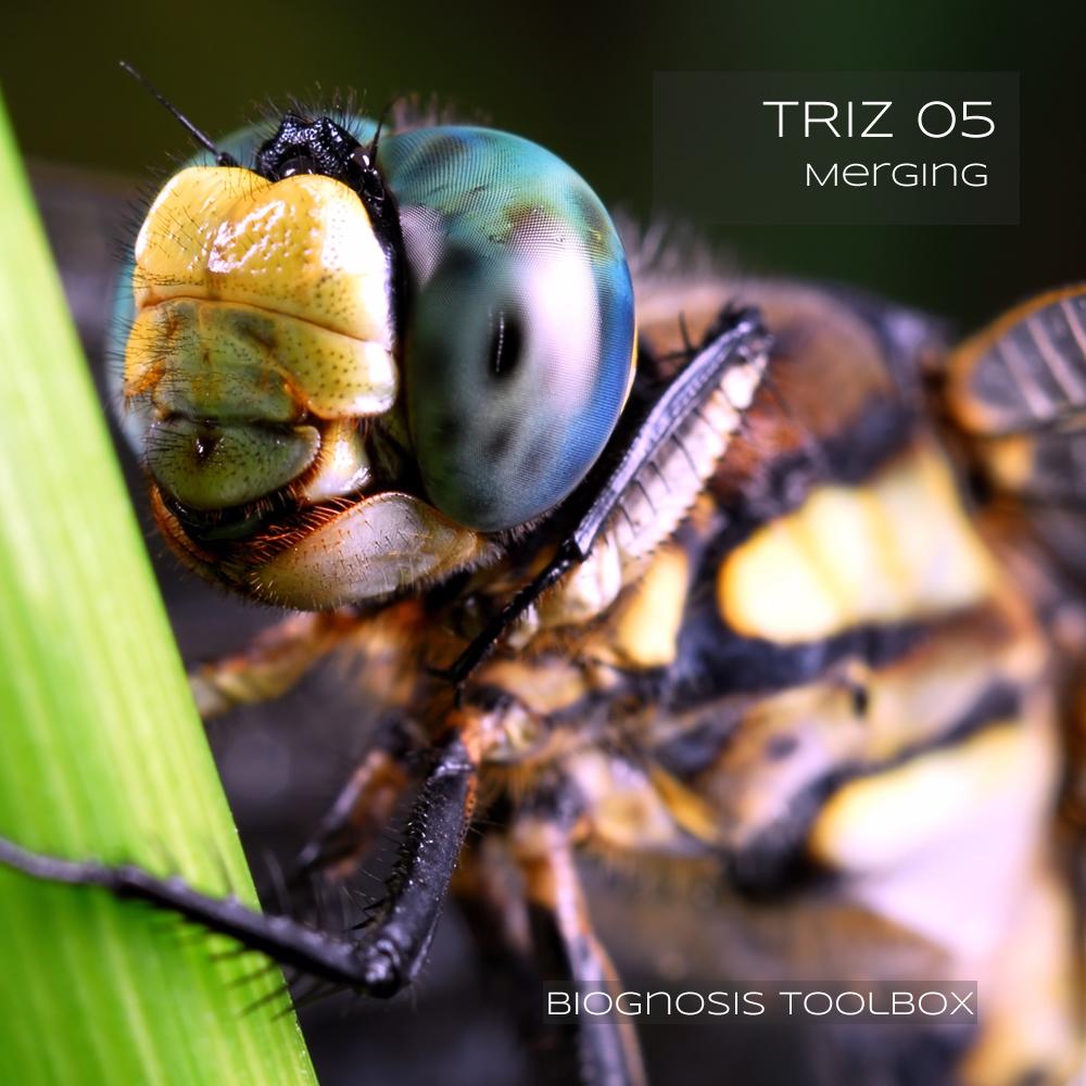 Dragonfly Eyes (Merging)
