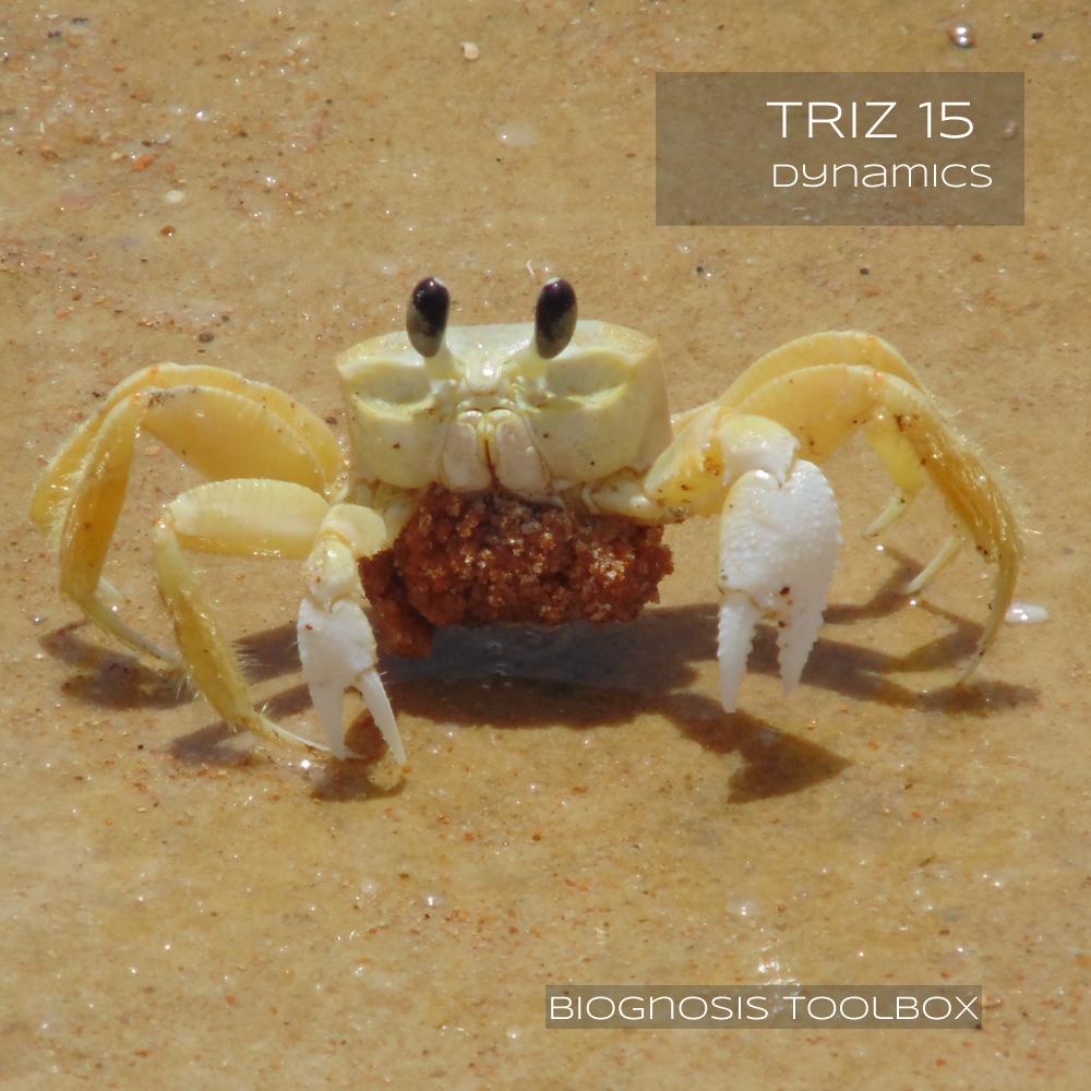 Crab (Dynamics)