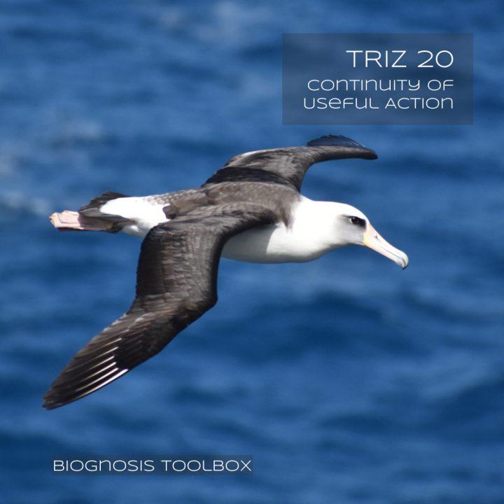 Albatros (Continuity)