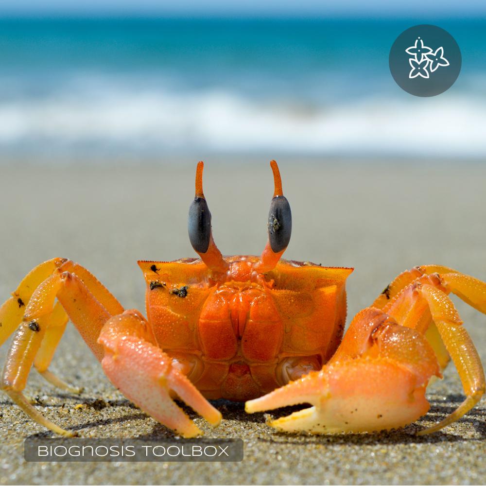 TRIZ Inventive Principle #04 (Crab)