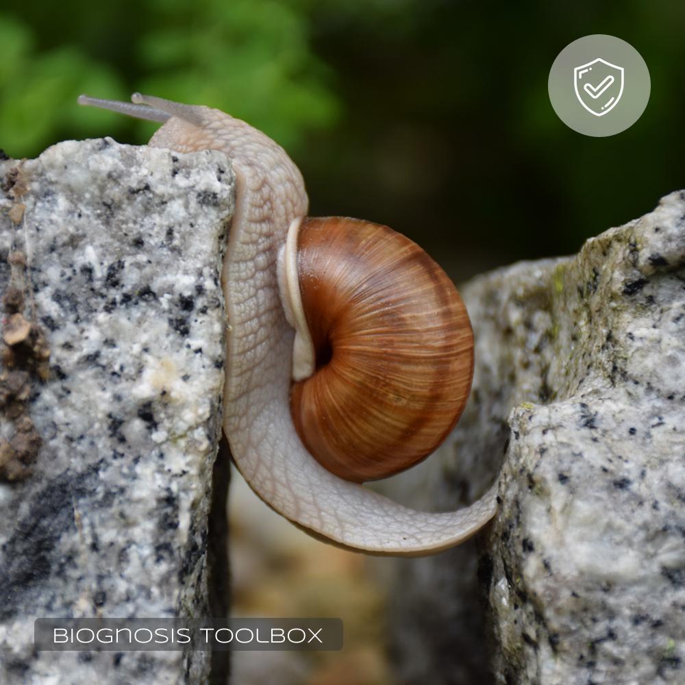 TRIZ Inventive Principle #09 (Snail)