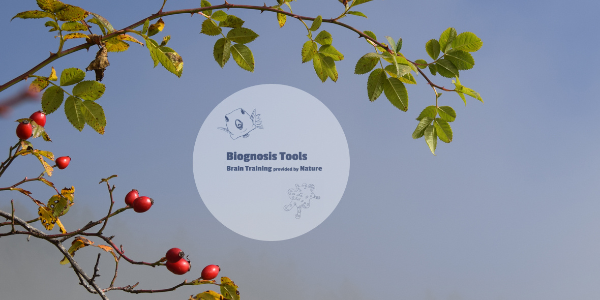 Rosehips with Biognosis Logo