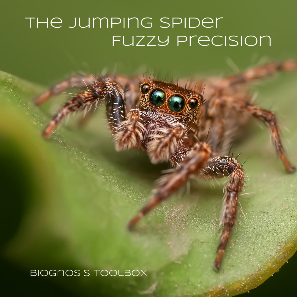 "Picture of a jumping spider on a leaf with slogan ""The Jumping Spider Fuzzy Precision"""